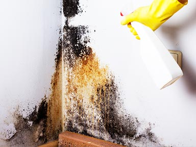 Living with mold in your home can lead to numerous health ailments. Treating and curing your mold problem is critical to address!